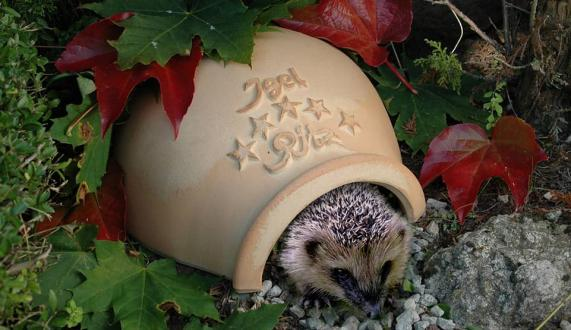 Hedgehog Ritz