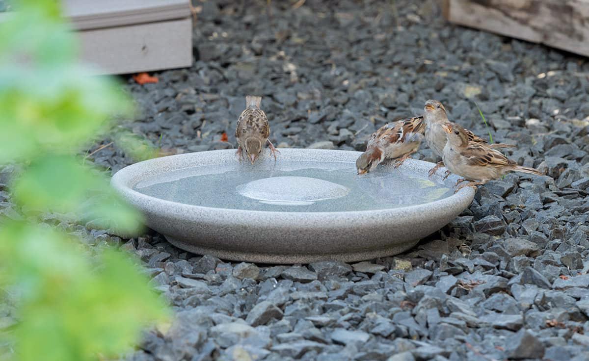 Vogeltränke Granicium® | DENK Keramik