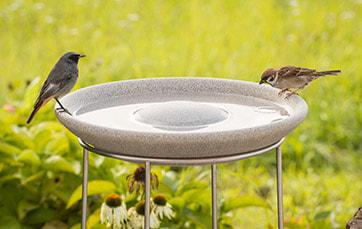 Vogeltränke Granicium mit Ständer
